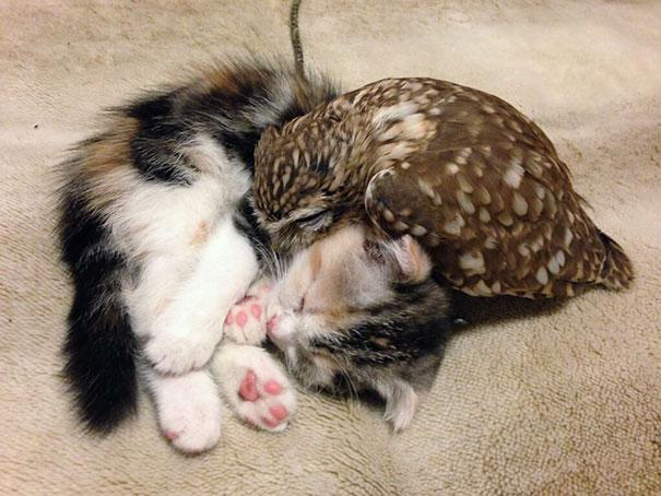 kitten-owl-best-friends-fuku-marimo-hukulou-coffee-japan-17.jpg