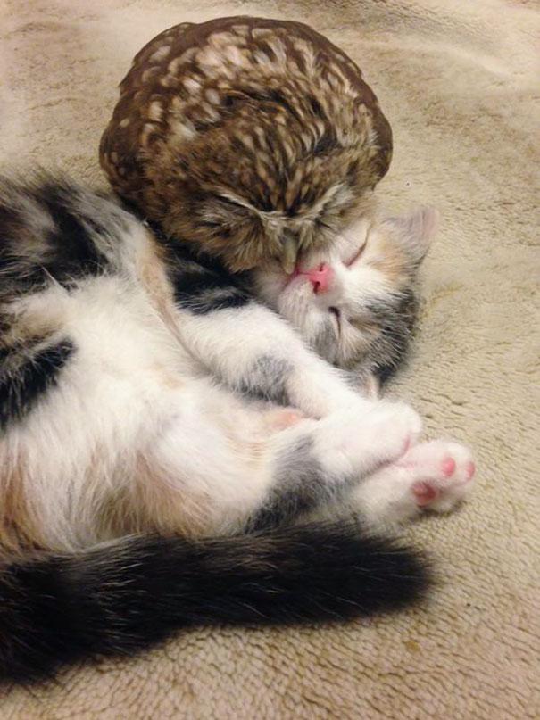 kitten-owl-best-friends-fuku-marimo-hukulou-coffee-japan-22.jpg