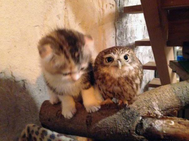 kitten-owl-best-friends-fuku-marimo-hukulou-coffee-japan-32.jpg