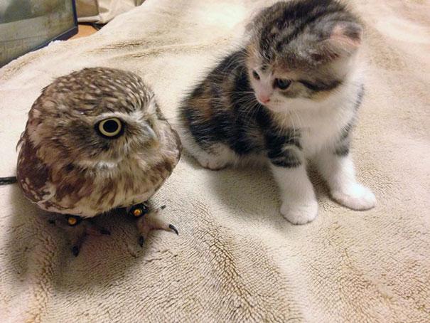 kitten-owl-best-friends-fuku-marimo-hukulou-coffee-japan-42.jpg