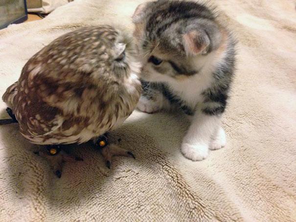 kitten-owl-best-friends-fuku-marimo-hukulou-coffee-japan-52.jpg