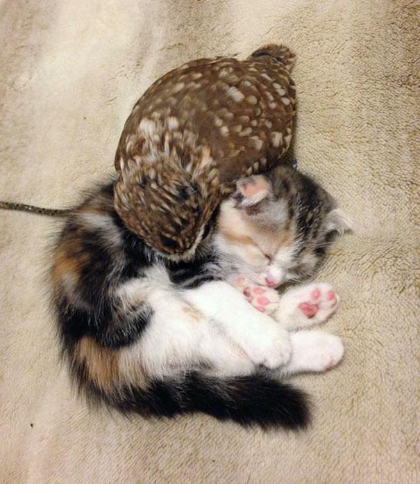 kitten-owl-best-friends-fuku-marimo-hukulou-coffee-japan-62.jpg
