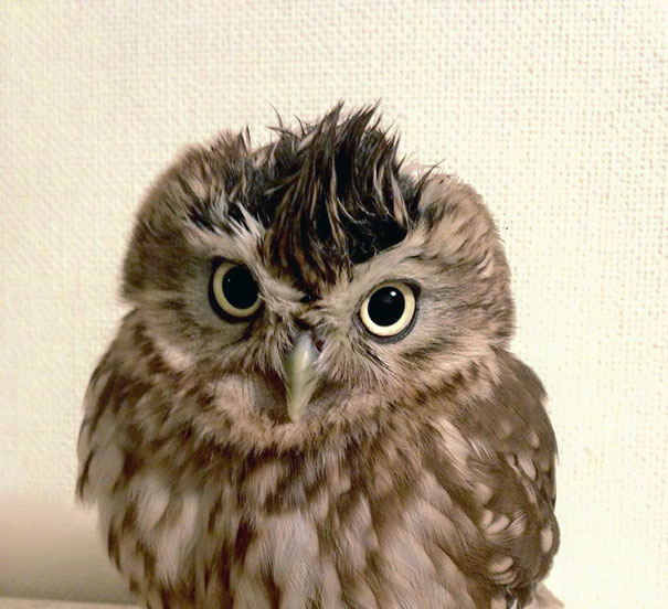 kitten-owl-best-friends-fuku-marimo-hukulou-coffee-japan-72.jpg