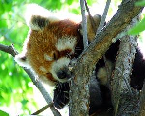 panda3_1.jpg