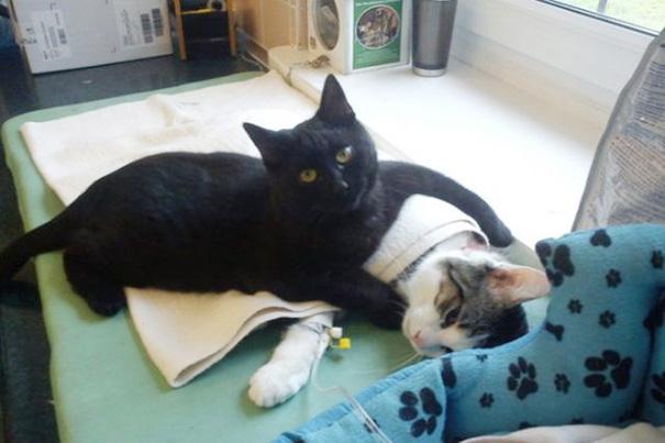 veterinary-nurse-cat-hugs-shelter-animals-radamenes-bydgoszcz-poland-1.jpg