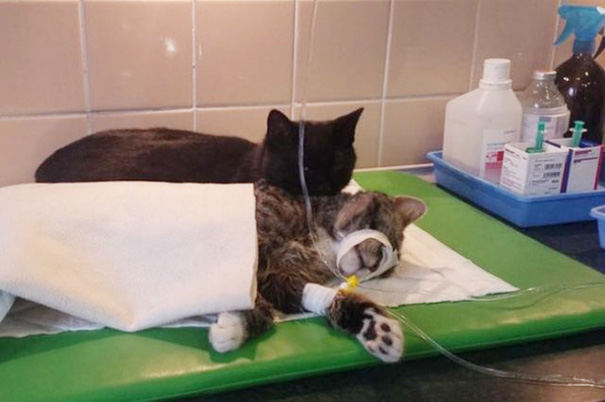 veterinary-nurse-cat-hugs-shelter-animals-radamenes-bydgoszcz-poland-10_1.jpg