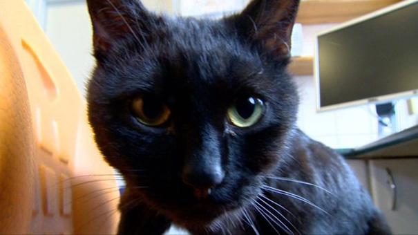 veterinary-nurse-cat-hugs-shelter-animals-radamenes-bydgoszcz-poland-5.jpg