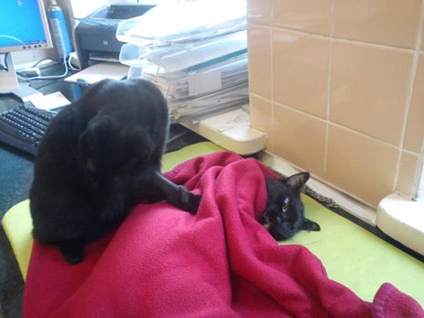 veterinary-nurse-cat-hugs-shelter-animals-radamenes-bydgoszcz-poland-7.jpg