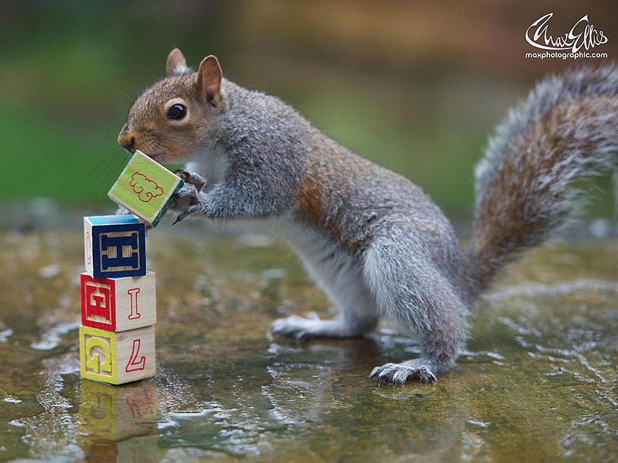 wildlife-photography-squirrels-max-ellis-10__880.jpg
