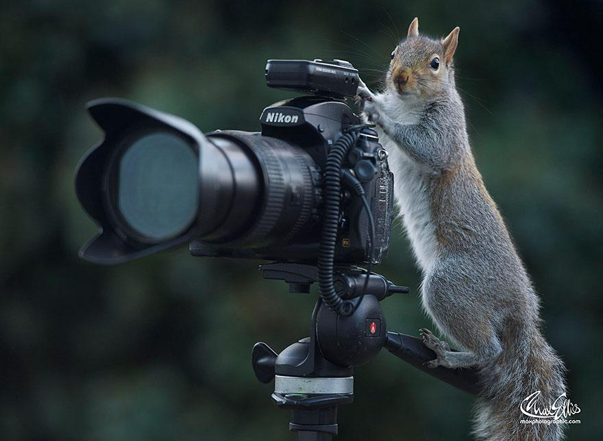 wildlife-photography-squirrels-max-ellis-14__880.jpg