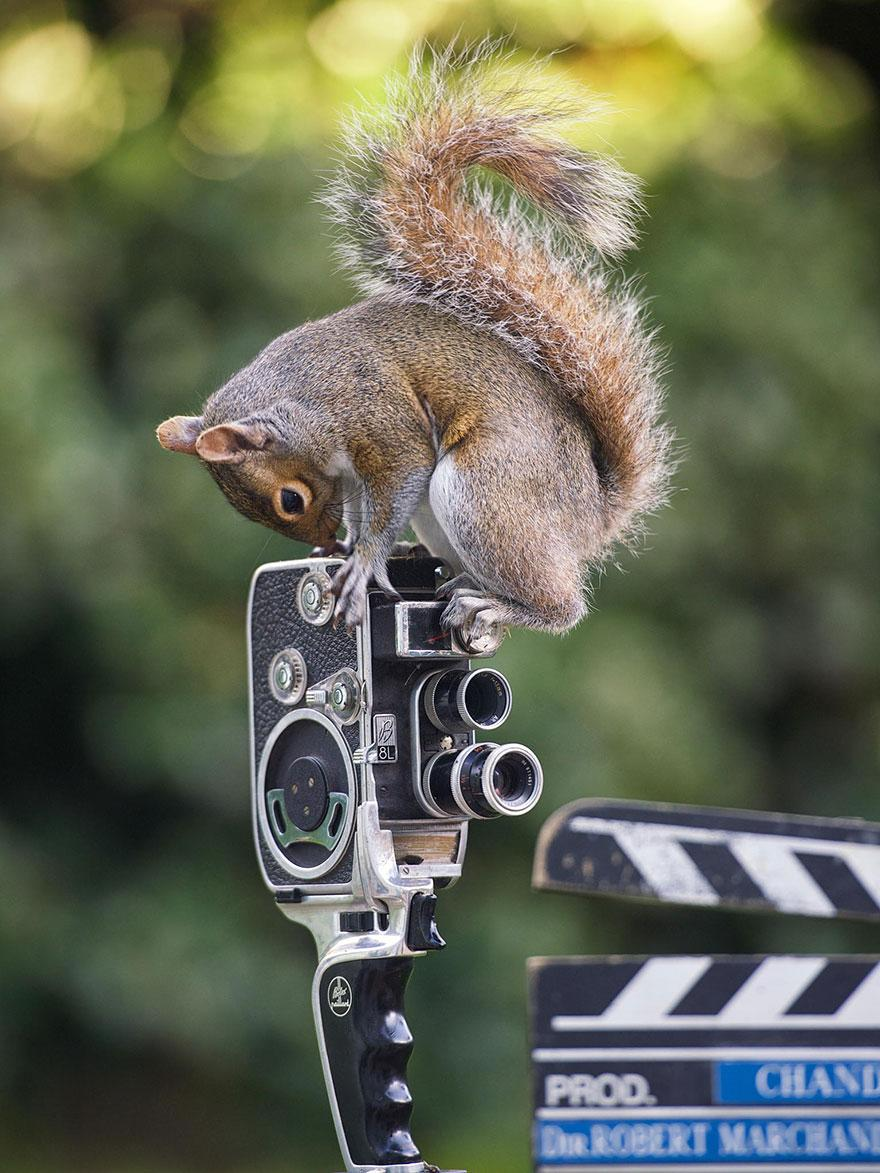 wildlife-photography-squirrels-max-ellis-2__880.jpg