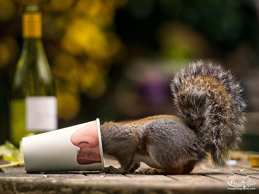 wildlife-photography-squirrels-max-ellis-8__880.jpg