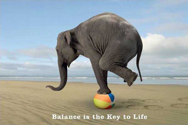 439459_Balance-Is-The-Key--Elephant.jpg