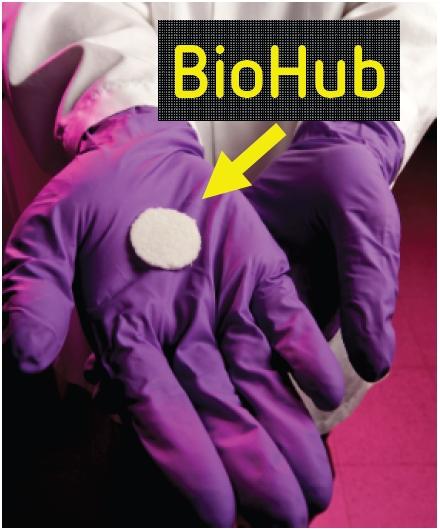 biohub_1.jpg