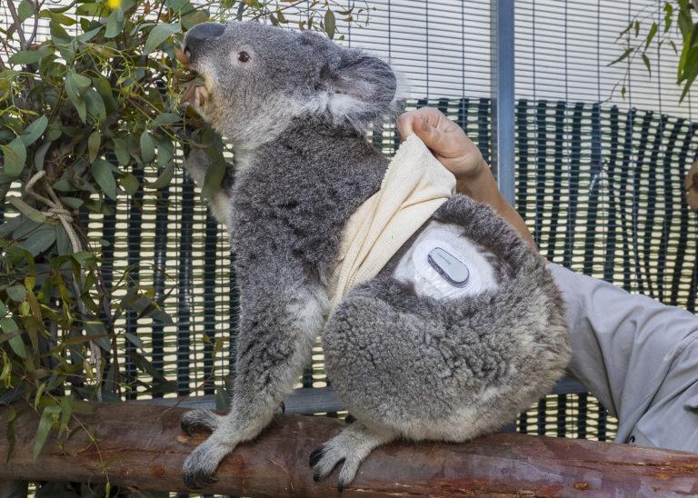 koalamonitor_001_lg-768x548.jpg