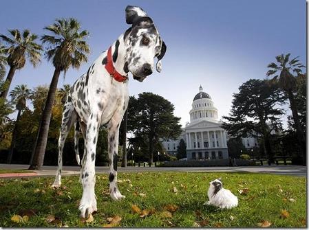 little_dog_and_big_dog-4116.jpg