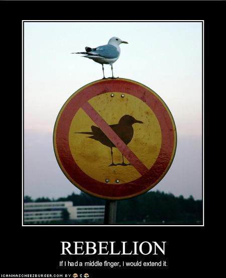 rebellion.jpg