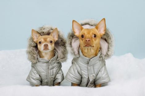 winter-coats-dogs.jpg
