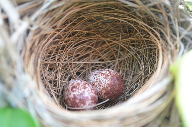 nest-410147_640.jpg