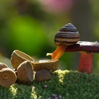 Milyen lehet a románc csiga-módra?