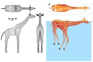 Tudnak-e a zsiráfok műugrani?