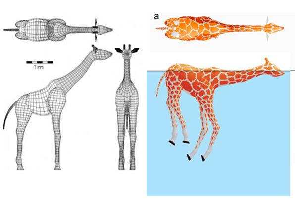 giraffe_swim2.jpg