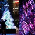 Bringa-karácsonyfa Sydney-ben