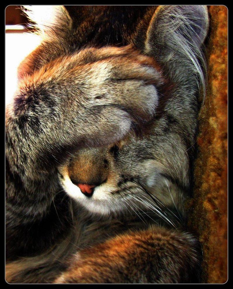 cat-embarrassed.jpg