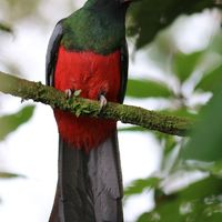 Selva – síkvidéki esőerdők, Costa Rica