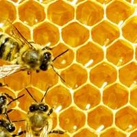 Tanuljunk demokráciát a méhektől!