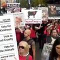 Vegánok tüntetnek Ausztráliában