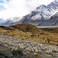 A nemzetközi verseny nyomása alatt van Új-Zéland