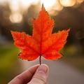Miért népszerű Kanada?