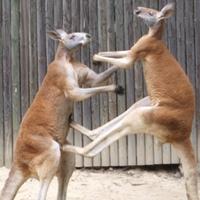 Újabb pofont kaphat a Turnbull-kormány Ausztráliában