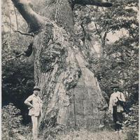 A zselízi fakastély