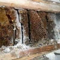 Méhek lépe a redőnytokban. Méhek eltávolítása.
