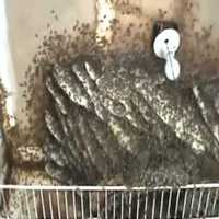 Rejtett helyeken fészkelő méhek