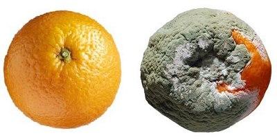 Rohad a narancs.jpg