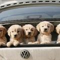 Kutyabiztonság az autóban