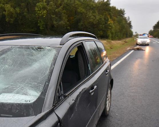 Autót elütő szarvas, úton üldögélő vaddisznó