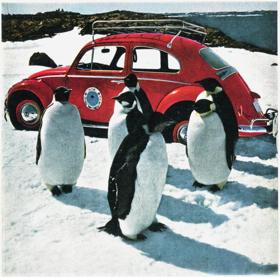 Bogár az Antarktiszon