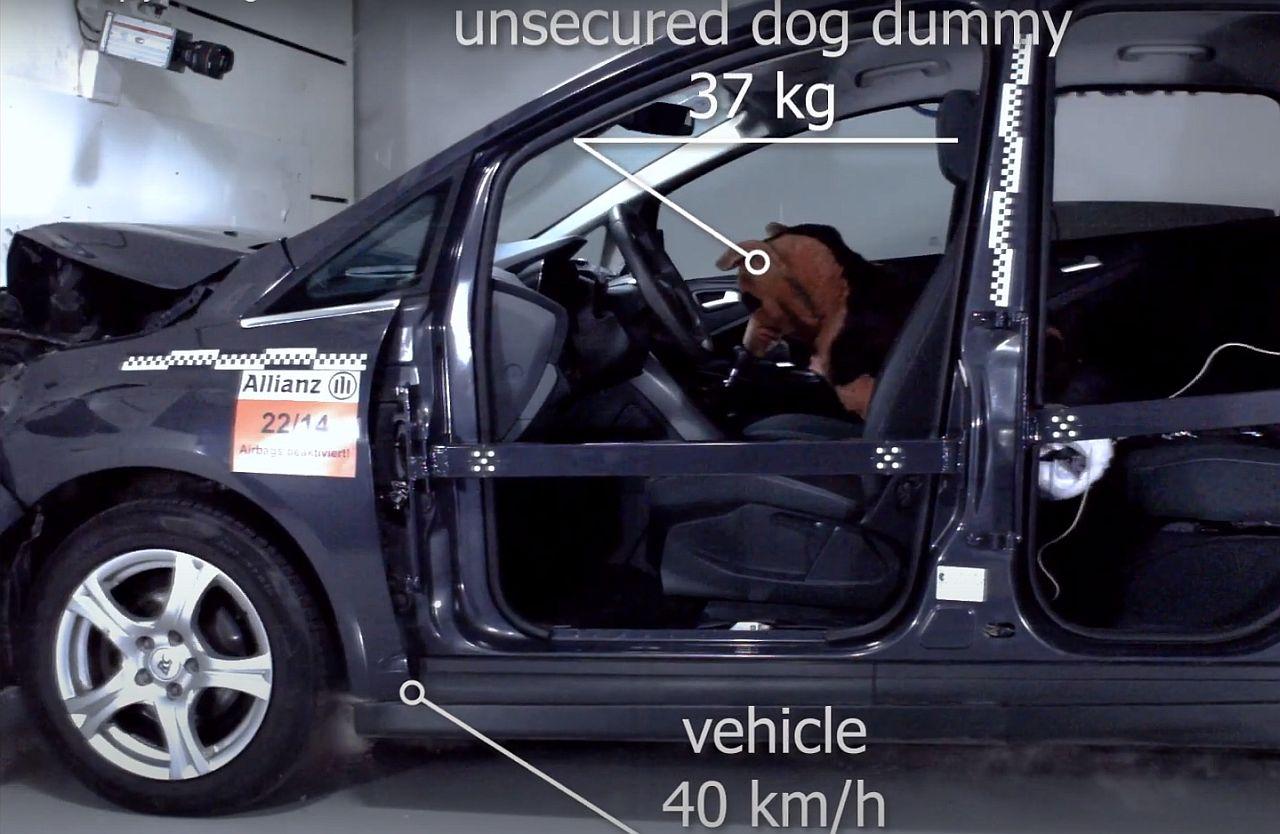 dog_dummy.jpg