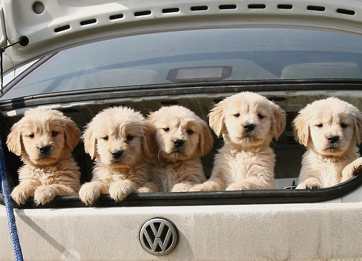 dog_in_car_m.png