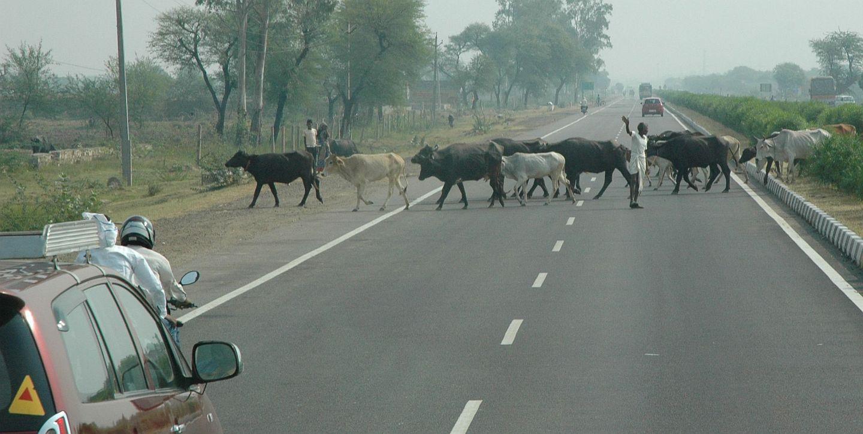 india14_m.jpg