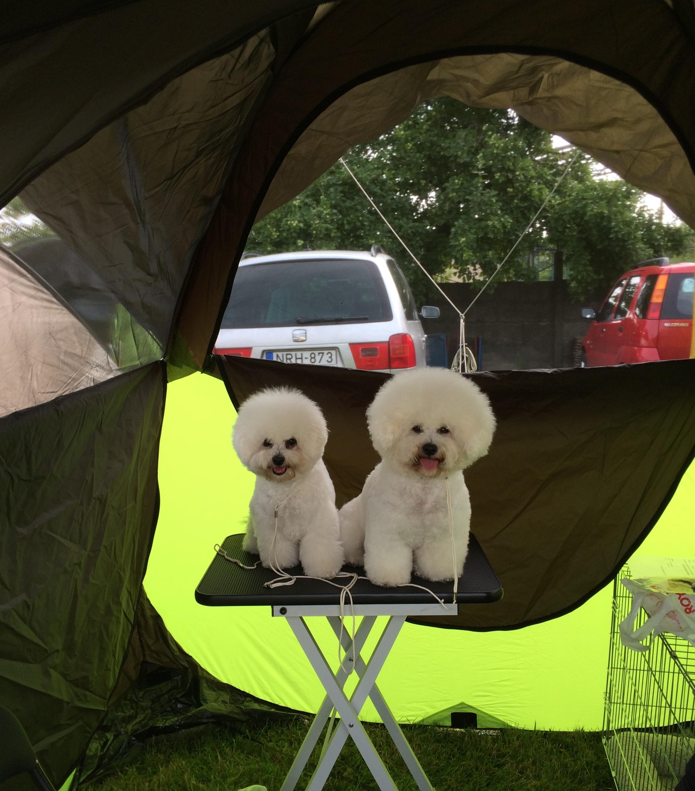 Kiállítás, avagy felavattuk a sátrat