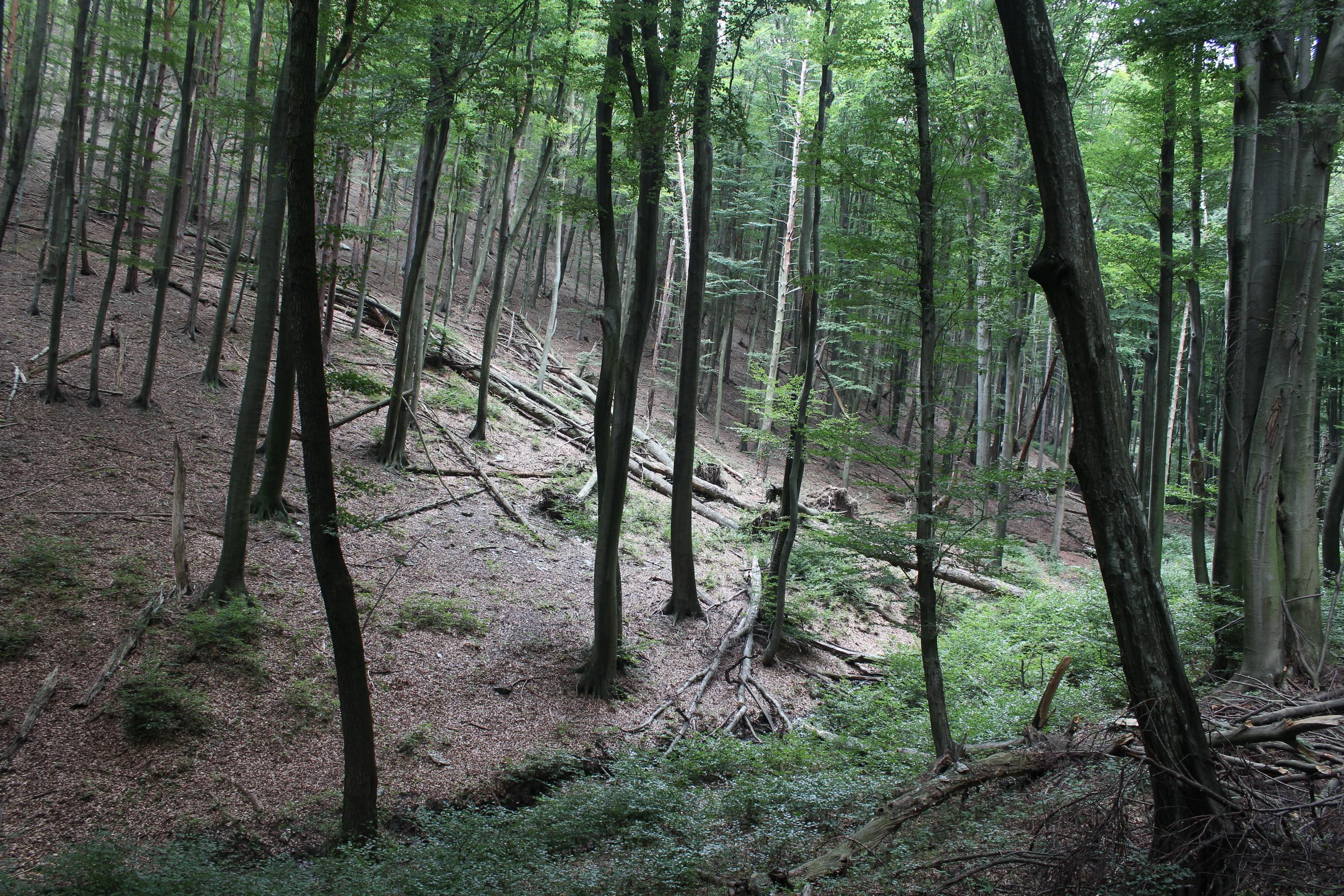 Néhány éve a jég súlya alatt sok fa dőlt ki. (Fotó: Papp Géza, ddkektura.blog.hu)