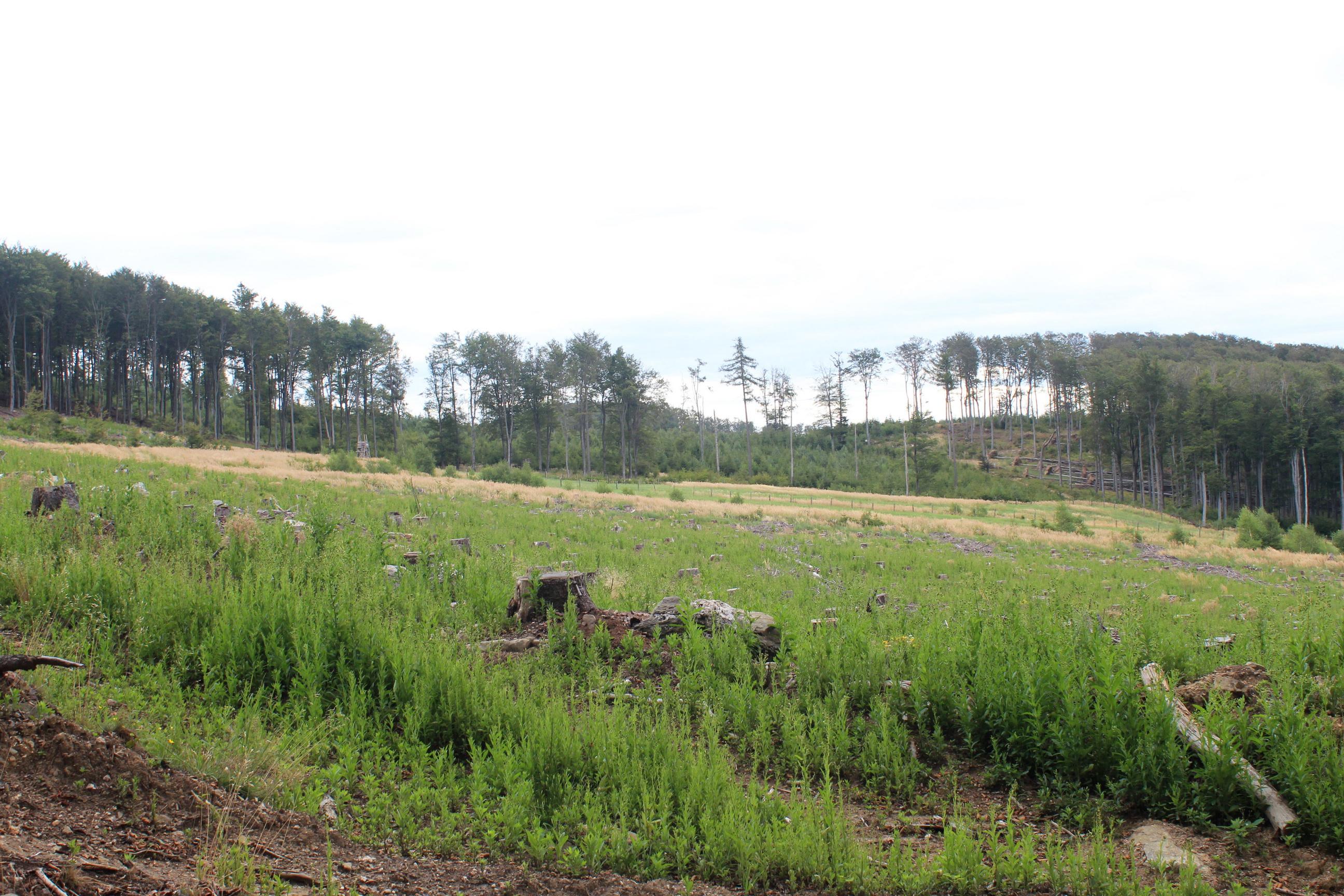 Ezt a területet - a kék kereszt jelzés kezdetének közelében - tarra vágták. (Fotó: Papp Géza, ddkektura.blog.hu)