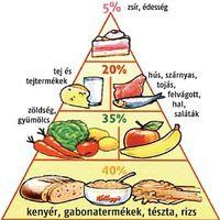 Hízás, fogyás, kalóriák