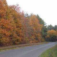 Erdőspuszták