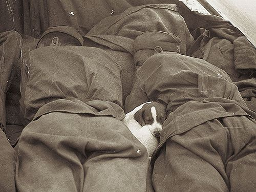 1945_russian_soldiers_sleeping_with_a_puppy_in_prague_during_world_war_2.jpg